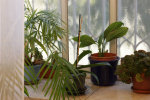 My lovely plants_GSH Interior design