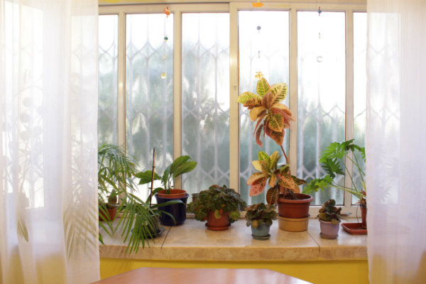The plants help reduce levels of indoor air pollution