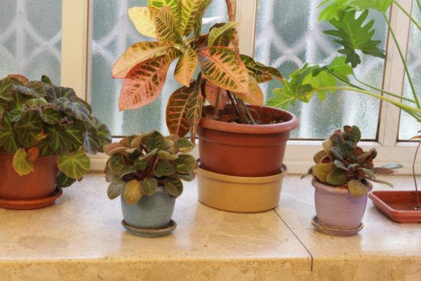 My plants_600