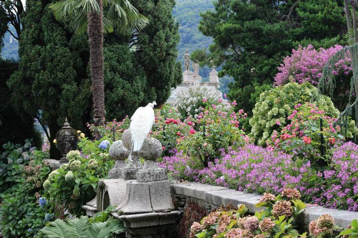 IMG_Isola_Bella_garden2